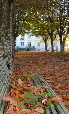 Free Autummn S Season In Swedish Park Stock Images - 22142964