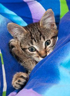 Free Sleepy Kitten Stock Images - 22147554