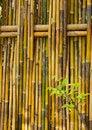 Free Bamboo Fence Royalty Free Stock Image - 22157096