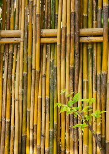 Free Bamboo Fence Royalty Free Stock Image - 22157096