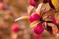 Free Cranberries Stock Photo - 22157560