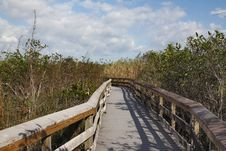 Free Road In Mangrove Stock Photo - 22161100