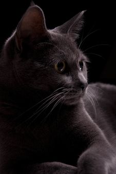 Free My Gray Kitty Stock Image - 22161481