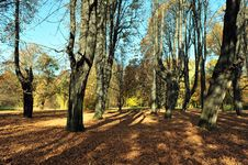 Free Autumn In The Mystery Park Royalty Free Stock Images - 22161589