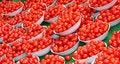 Free Plum Tomatoes. Royalty Free Stock Photo - 22170945