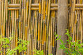 Free Bamboo Fence Royalty Free Stock Photography - 22173827