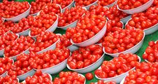 Free Plum Tomatoes. Royalty Free Stock Photo - 22170945