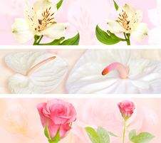 Decorative Flower Banner Royalty Free Stock Photography