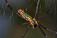 Free Spider Stock Photo - 22173750