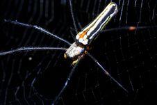 Free Spider Stock Photo - 22173770