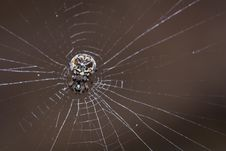 Free Spider Royalty Free Stock Photos - 22173828