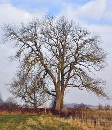 Free Bare Tree Stock Photography - 22175942