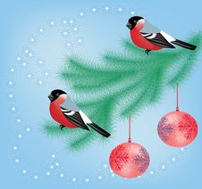 Free Bullfinch On The Branch Royalty Free Stock Photos - 22177338