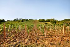 Free Young Vineyard With Arable Land Royalty Free Stock Photography - 22179097