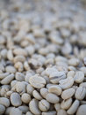 Free Raw Coffee Bean Stock Image - 22189281