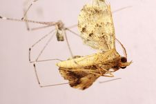 Free House Spider Eats Moth Stock Image - 22180611