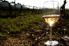 Free Glass Of Wine In The Vineyards Stock Photography - 22182532