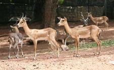 Free Deer Park Royalty Free Stock Image - 22185956