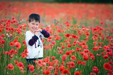 Free Cute Boy In Poppies Royalty Free Stock Images - 22188699