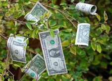 Free Money Tree Stock Photo - 22189680