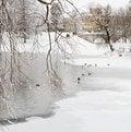 Free Winter Park Stock Photos - 22193983