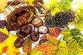 Free Autumn Leaves Stock Image - 22194771