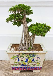 Bonsai. Stock Photography