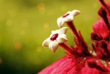 Free Ashanti Blood Flower With Mantis Stock Photos - 22192063