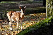Free Lonely Deer Stock Photos - 22193383