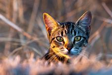Free Hidden Cat Royalty Free Stock Images - 22194869