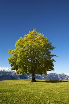 Free Solitary Tree On Blue Sky Royalty Free Stock Photo - 22195695