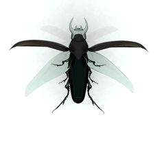 Free Stag Beetle Stock Images - 22198004