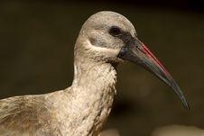 Free Bird 1 Stock Photography - 2221412