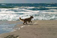 Free Dog On Beach Royalty Free Stock Photography - 2221427