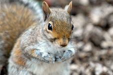 Free Squirrel Stock Image - 2222211