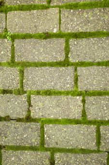 Free Green Moss On Brick Pathway Stock Photos - 2222293