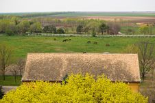 Free Horses On A Farm Stock Photos - 2223163