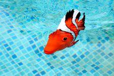 Free Fake Fish Royalty Free Stock Images - 2223299