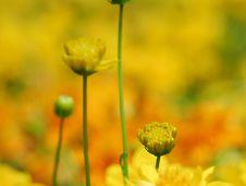 Free Yellow Flowers Royalty Free Stock Photos - 2224478