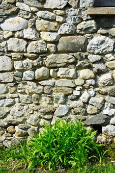 Green In Front A Stoned Wall Stock Image