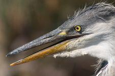 Heron Bird Head Stock Photo