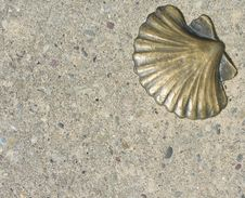 Free Brass Seashell Royalty Free Stock Photography - 2226027