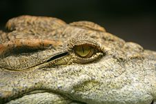 Free Siam Crocodile 2 Stock Photo - 2227850