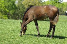 Free Foal Stock Image - 2228451