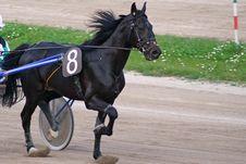 Free Horse Racing Royalty Free Stock Photo - 2229215