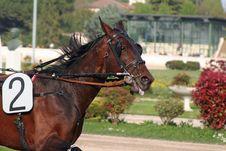 Free Horse Racing Stock Photos - 2229253