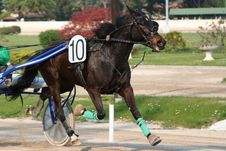 Free Horse Racing Stock Photography - 2229262