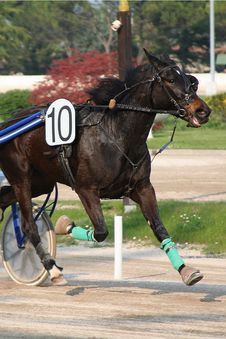 Free Horse Racing Stock Photo - 2229290