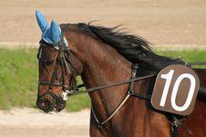 Free Horse Racing Stock Image - 2229301
