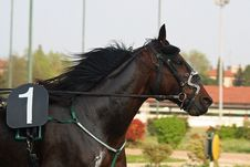 Free Horse Racing Stock Photo - 2229390